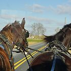Amish Buggy Ride  by clizzio