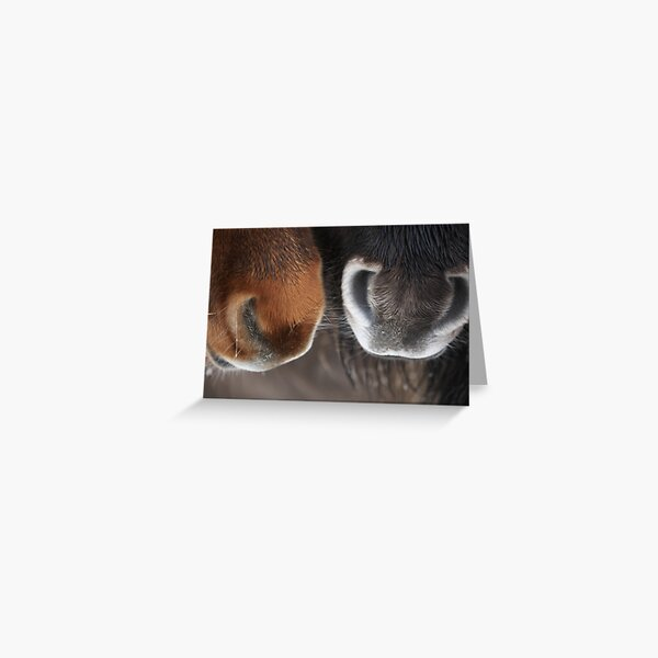 Shetland Pony Noses Greeting Card