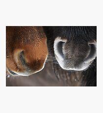 Shetland Pony Noses Photographic Print