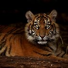 Baby Tiger - Looking Up by Daniela Pintimalli