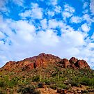 Tucson Mountain Park Arizona 2014 by Deana Greenfield