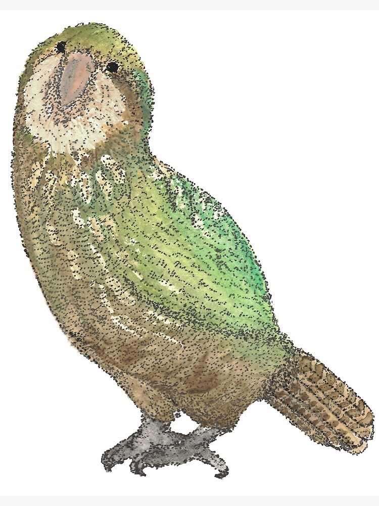 Kakapo by walkinghumility