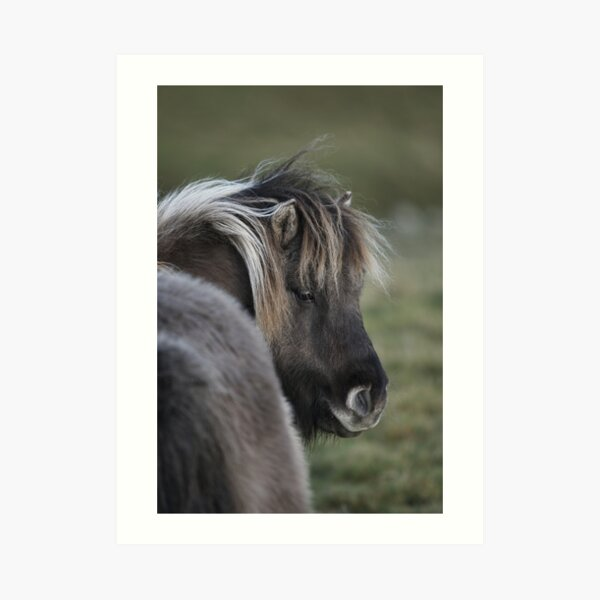 Shetland Pony Art Prints Redbubble