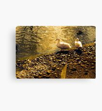 Two Duckies Canvas Print