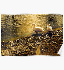 Two Duckies Poster