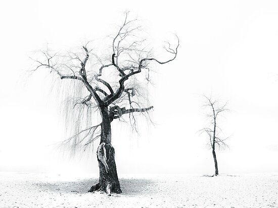 Old Tree, Young Tree by Tara  Turner