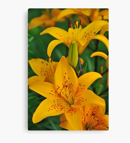 """Asiatic Lily """"Helios"""" Canvas Print"""