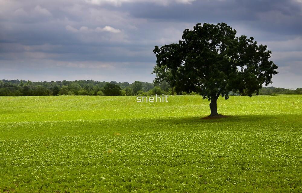 Single tree in the middle of fields by snehit