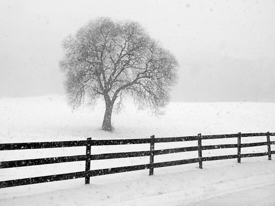 listen: the snow is falling all around by J.K. York