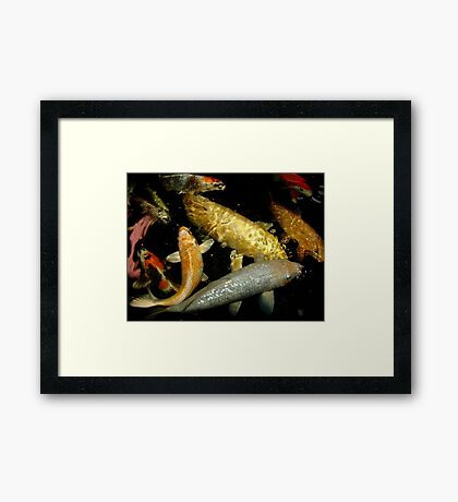 Koi 9 Framed Print