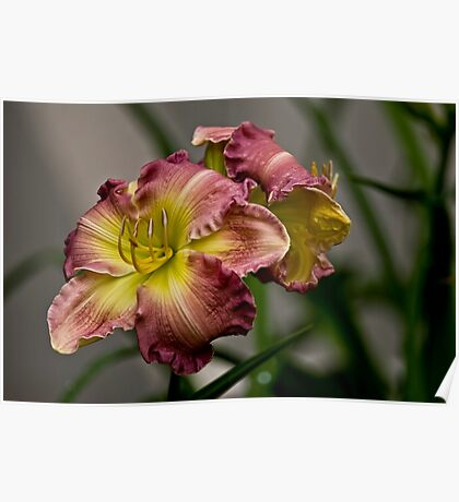 "Daylily ""Wisteria"" Poster"
