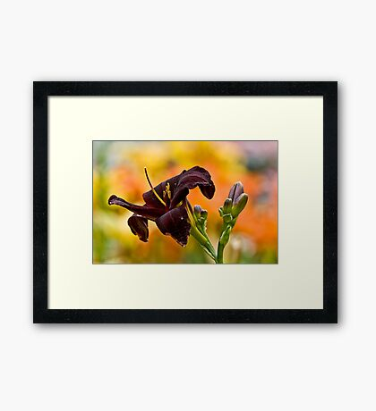 """Daylily """"Rootbeer"""" Framed Print"""