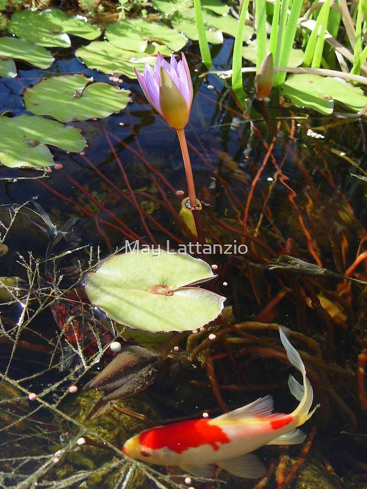Koi and Waterlily by May Lattanzio