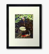 Koi and Waterlily Framed Print