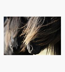 Shetland Ponies Photographic Print