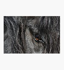 Stallion Photographic Print