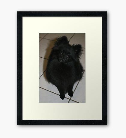 Prince Dale Framed Print