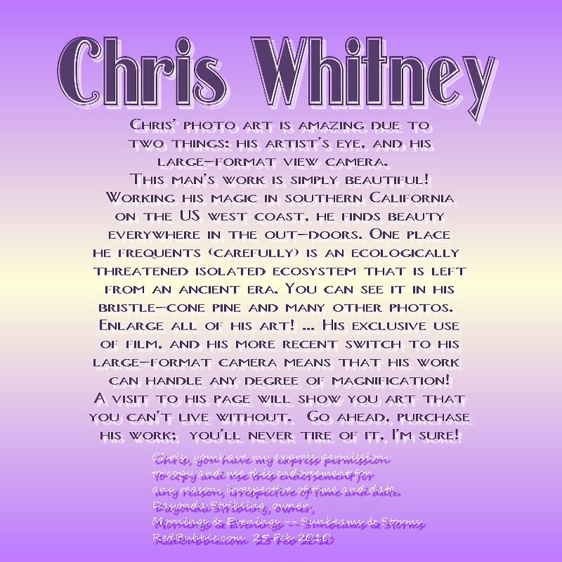 CHRIS WHITNEY by Dayonda
