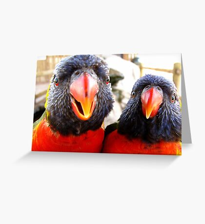Rainbow Lorikeets ~ All beak & In your Face! Greeting Card