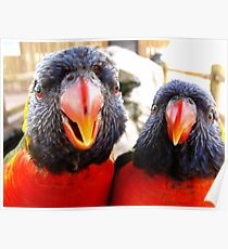 Rainbow Lorikeets ~ All beak & In your Face! Poster