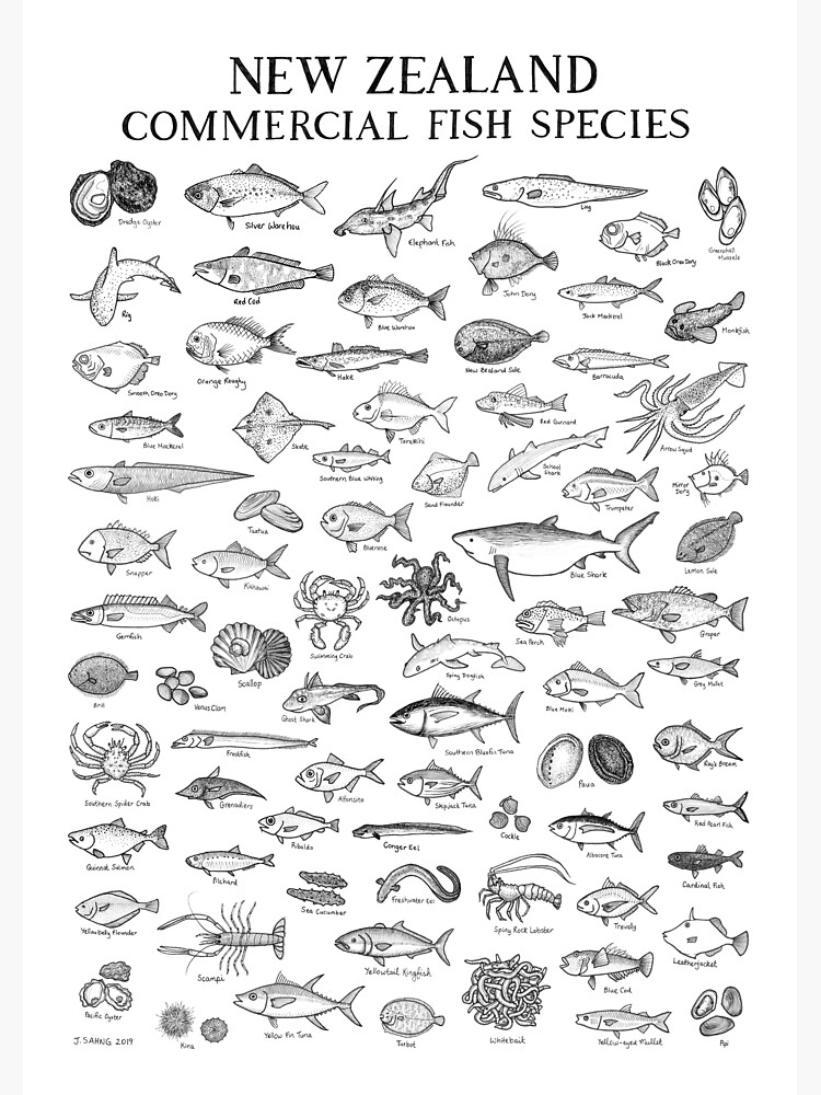 New Zealand Commercial Fish Species by jendraws