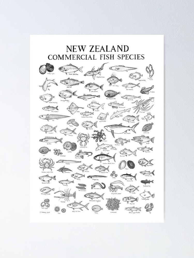 Alternate view of New Zealand Commercial Fish Species Poster