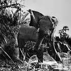 Protective Mama Elephant in Black and White by Kay Brewer