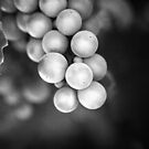 Berries in Black  by Annie Lemay  Photography