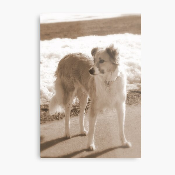 ♥ Love is....going out with your dog ♥ Metal Print