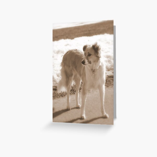 ♥ Love is....going out with your dog ♥ Greeting Card