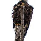 THE EAGLE by Gabi Swanson