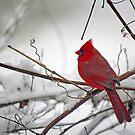 Winter rot von WalnutHill