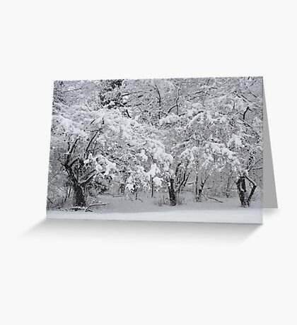 Snow Storm in NJ Greeting Card