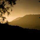 Misty Morning - Manti by Kory Trapane