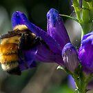 Busy Bee by RenaeSoleil