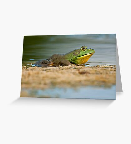 Pig Frog Relaxing Greeting Card