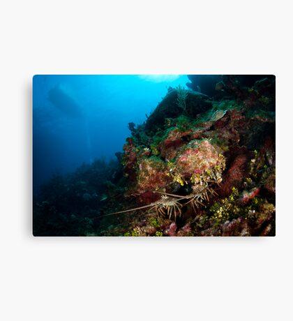 Lobsters den Canvas Print