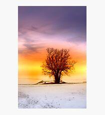 Single tree Photographic Print