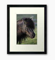 Shetland Pony Mare Framed Print