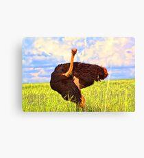 """Contentment- Ostrich in  Gauteng, South Africa"" Canvas Print"