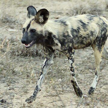 African Wild Dog - Wild Afrika by WildAfrika