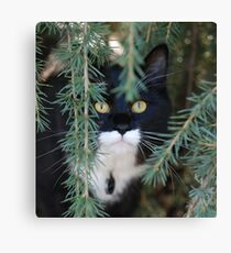 Eugene Kitten Canvas Print