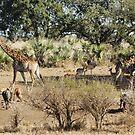 Pack - WildAfrika by WildAfrika