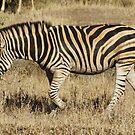 Zebra 2 - WildAfrika by WildAfrika