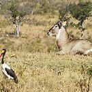 Waterbuck and Stork - WildAfrika by WildAfrika