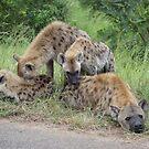 Hyena Family - WildAfrika by WildAfrika