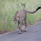 Leopard Walk - WildAfrika by WildAfrika