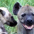 Hyena Laugh - WildAfrika by WildAfrika