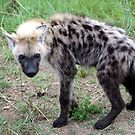 Hyena Young - Wild Afrika by WildAfrika