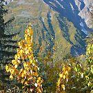 Autumn colors near Haines, Alaska by Istvan Hernadi